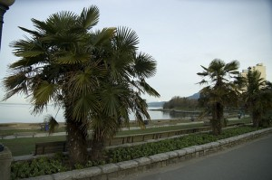 Palm Trees At English Bay